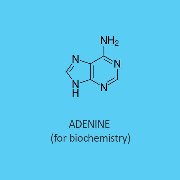 Adenine for biochemistry